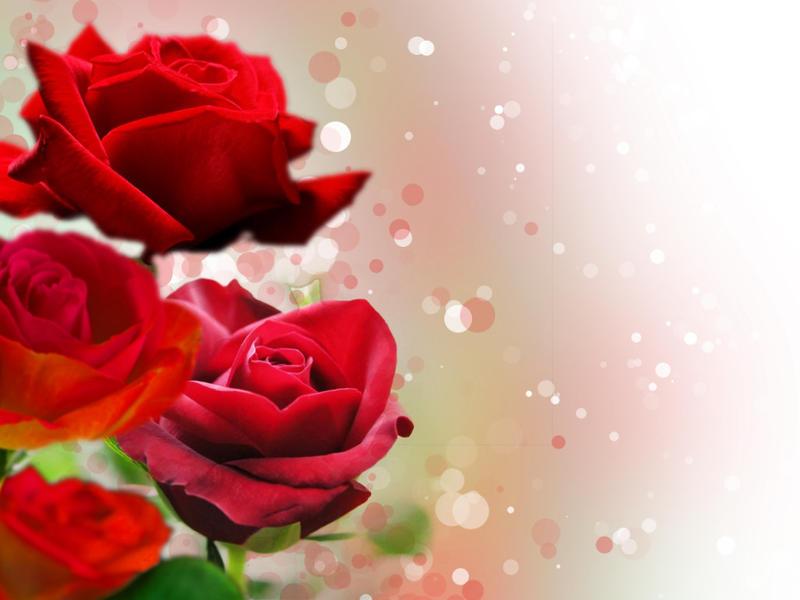 how to get added to stampylongnose love garden
