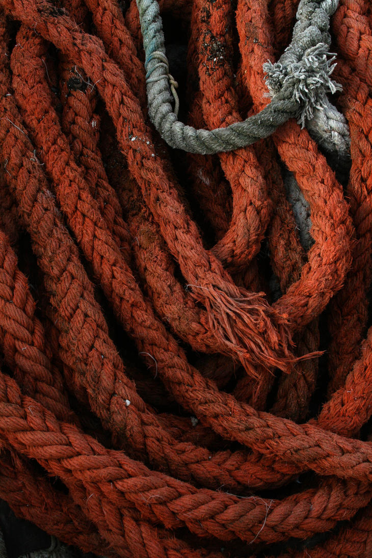 entangled by iluvar