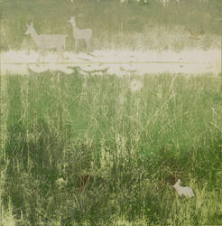 Marl Prairie Ecotone with Deer and Marsh Rabbit by footinadream
