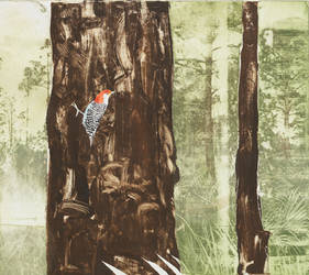 Slash Pine and Red-Bellied Woodpecker by footinadream