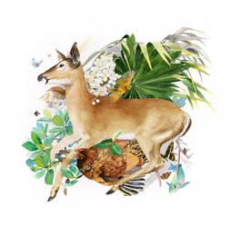 Key Deer Relationships