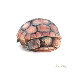 Baby Gopher Tortoise by footinadream