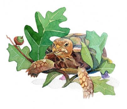 Baby Gopher Tortoise and Turkey Oak