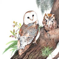Barn and Eastern Screech Owls