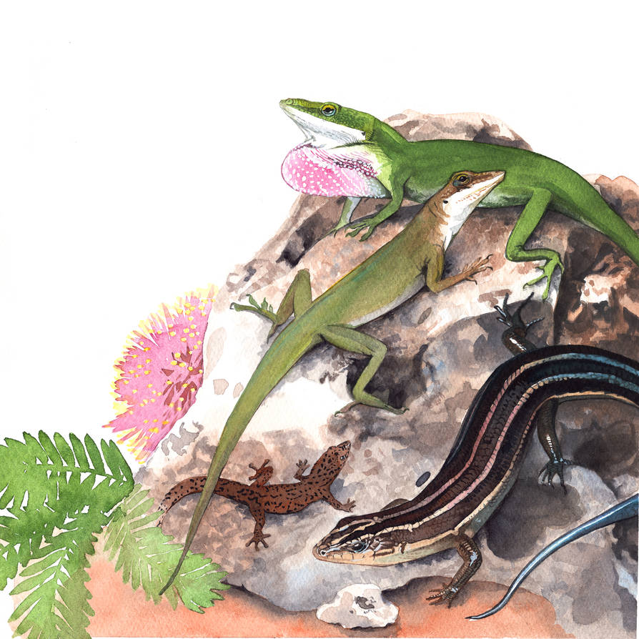 Florida Native Lizards