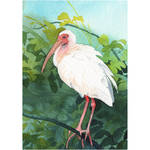 Ibis Study by footinadream