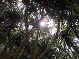 Light Through Palms by Treehugger93