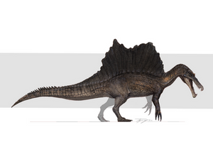 Reimagined spino