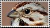 Sparrow Stamp by pauwz