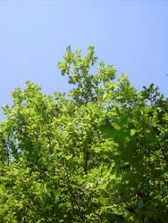 Stock: Forest Spray