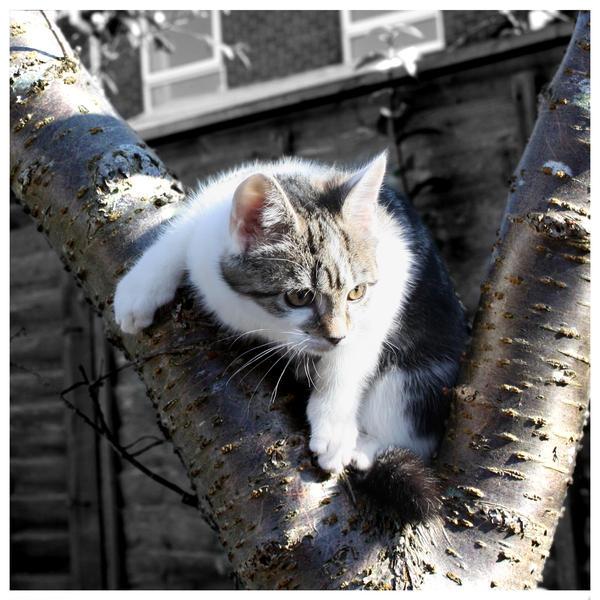 http://fc04.deviantart.net/fs44/i/2009/056/d/7/Tree_Cat_by_Jessterz.jpg