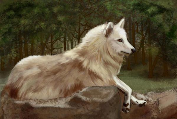 Wolf by Dascia
