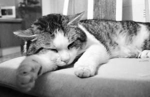 Sleepy Kitty by SysGen21