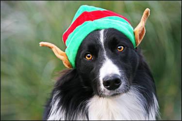 Christmas elf by svarci