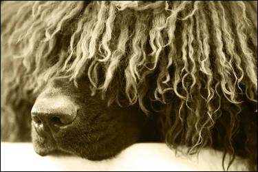 Curly dreams by svarci