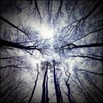 Lost in the dark forest by svarci