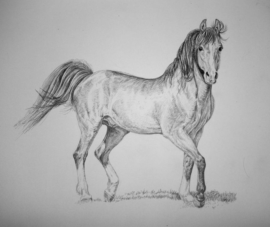 Pencil horse drawing by sunwolf29