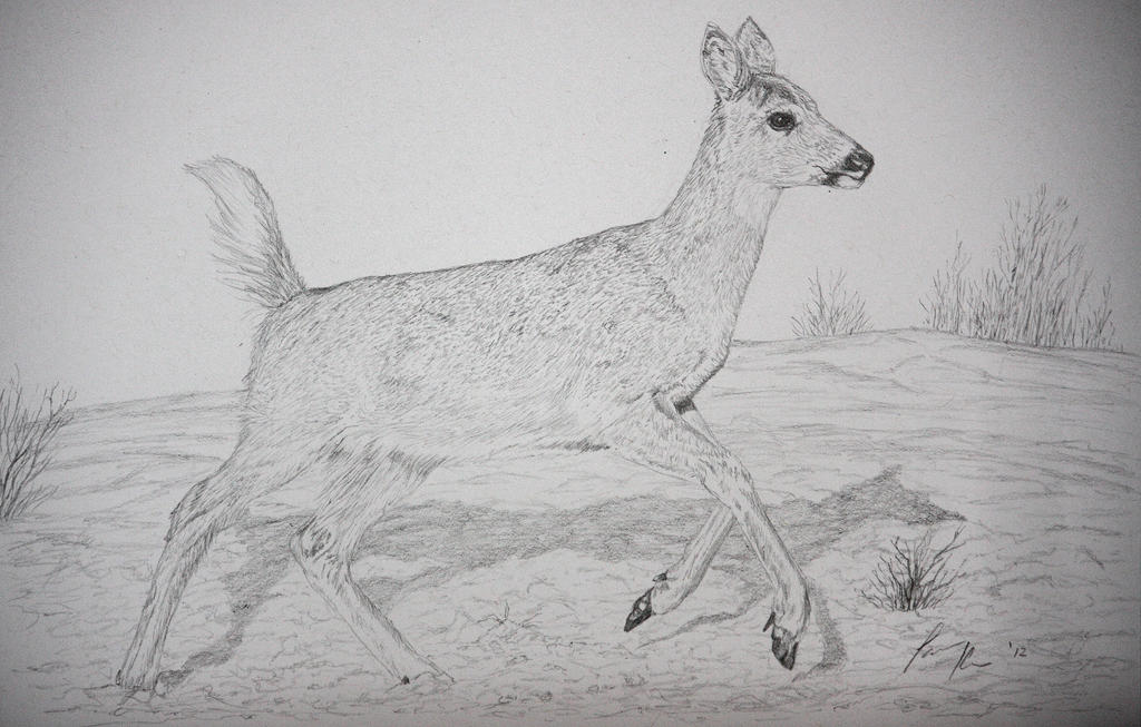 WHITETAIL DEER PENCIL DRAWING  eBay