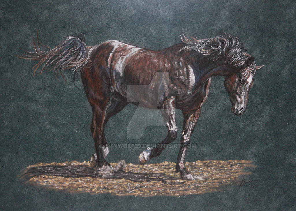 Black Horse - Pastel by sunwolf29