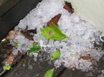 january hail 2
