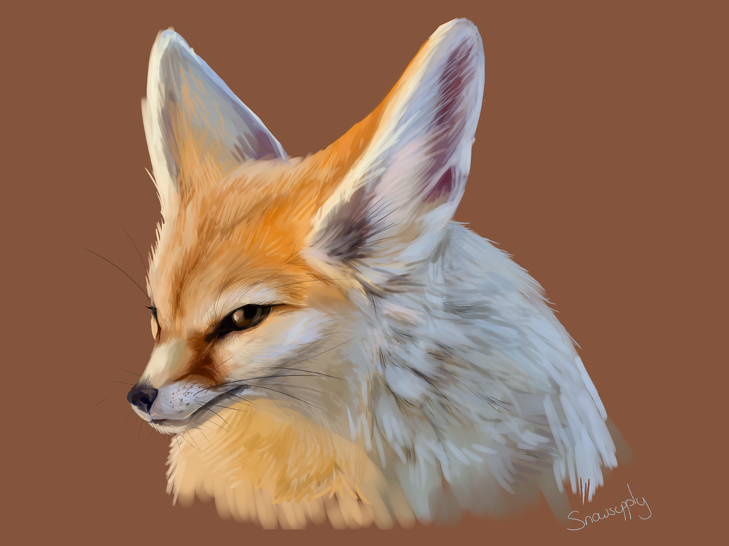 Fennec Fox by Snowsupply