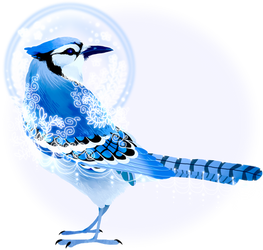 Blue Jay by Pyrrhociconia