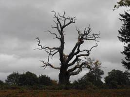 Old tree by kool007kat