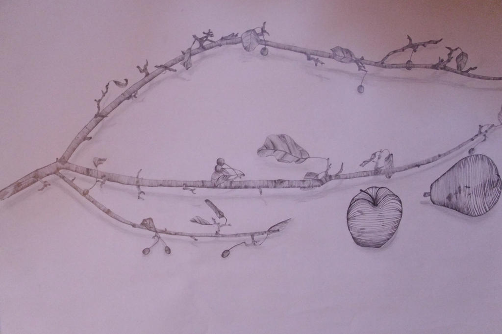 Contour Line Drawing Tree : Fruit and tree branch cross contour still life by crear