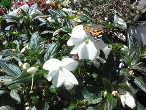 Flowered Butterfly
