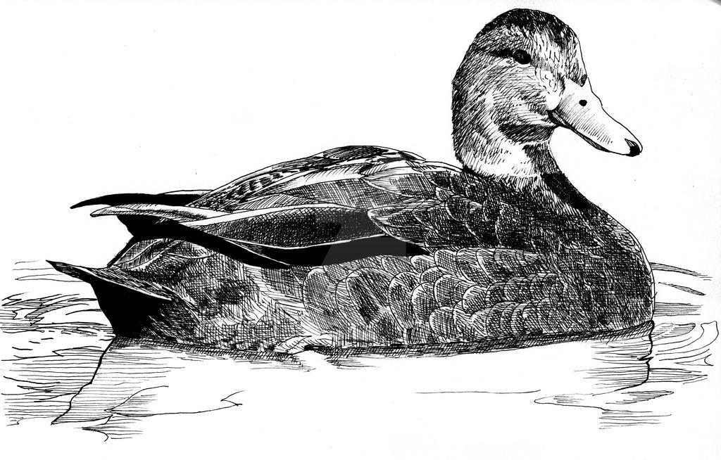 Duck by KendallightStudios