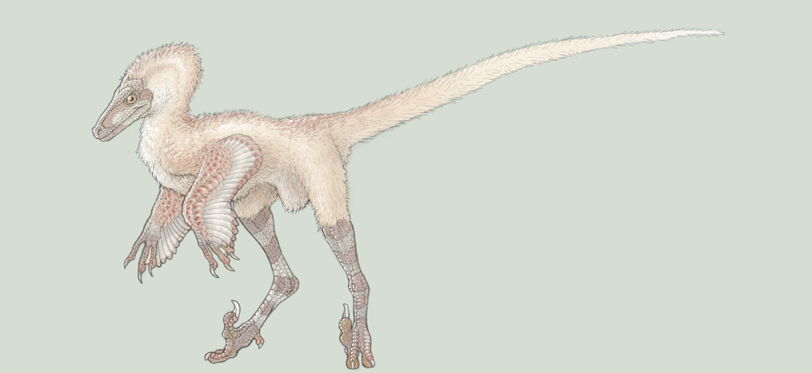 Velociraptor by ADigitalArtist