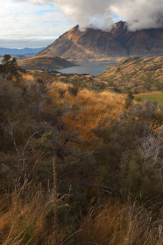 Golden Tufts of Wanaka by octane2