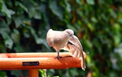 Baby dove 1 by YvdlArt