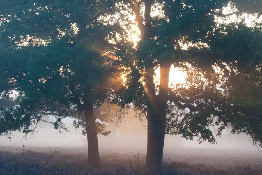 Sunrise by YvdlArt