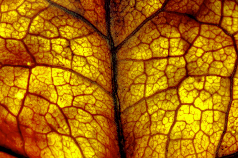 autumn leaf by YvdlArt