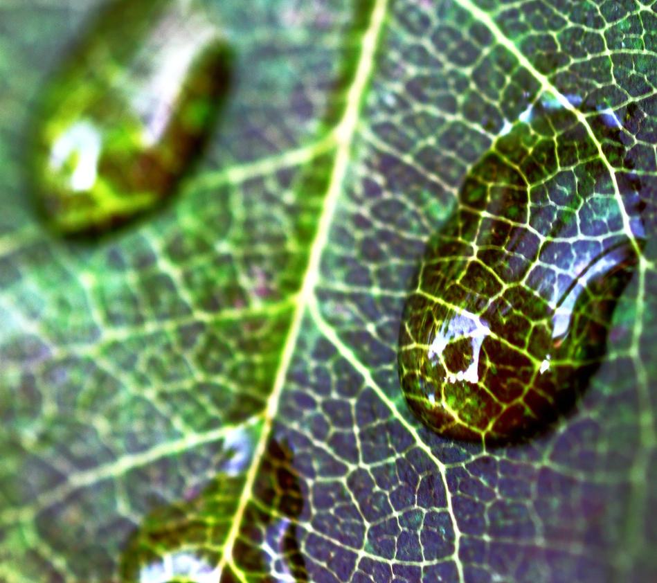 Autumn leaf 3 by YvdlArt