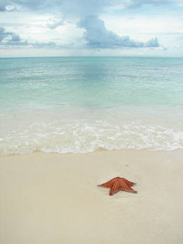 Sea Star - 2