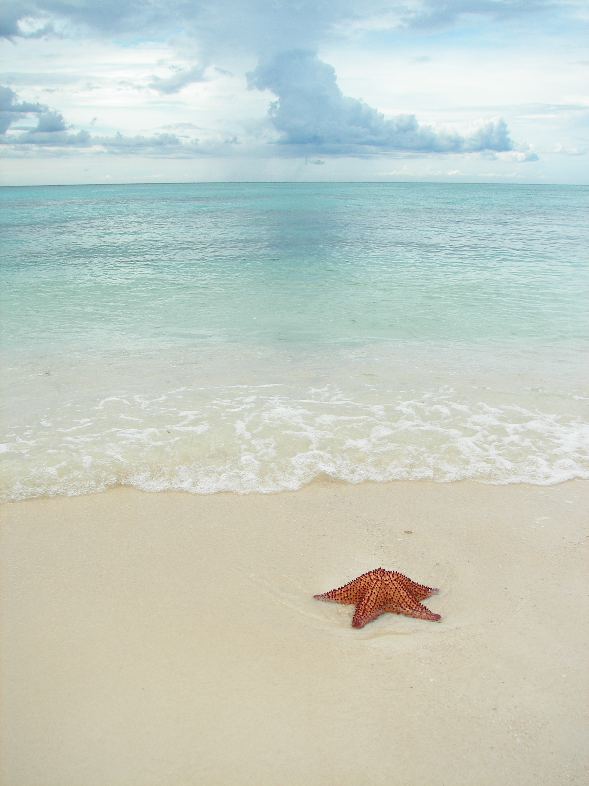 Sea Star - 2 by photohouse