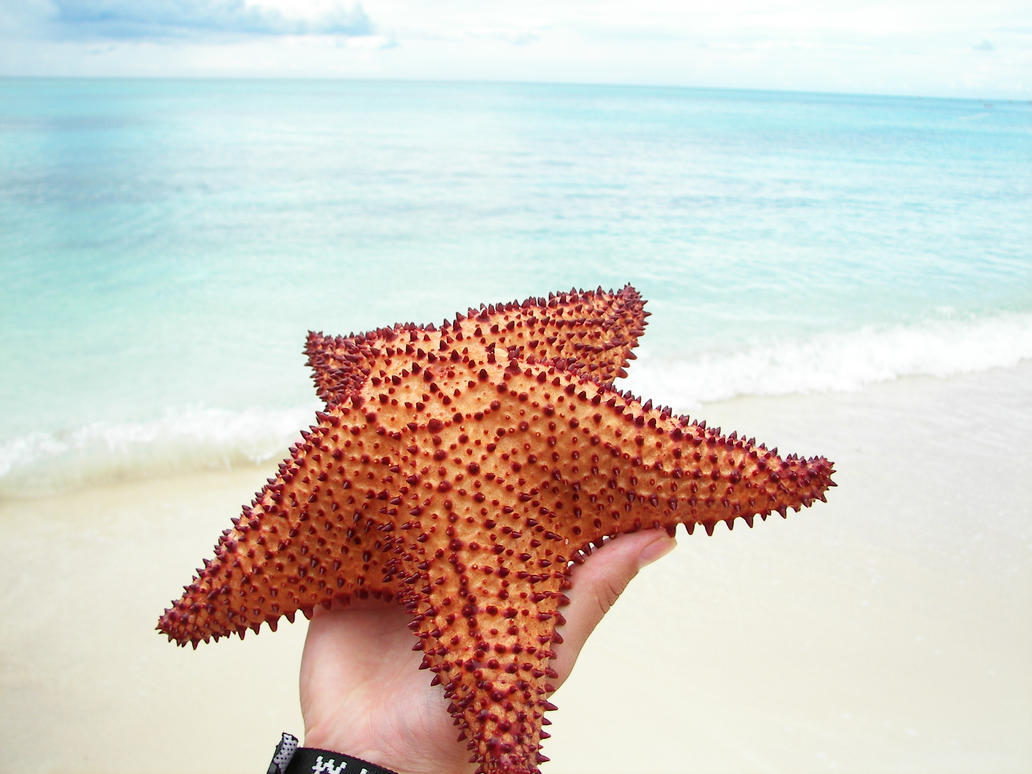 Sea Star - 3 by photohouse