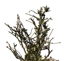 Twig 4 by photohouse