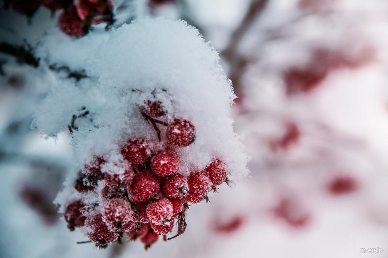 Coldberries by m-eralp
