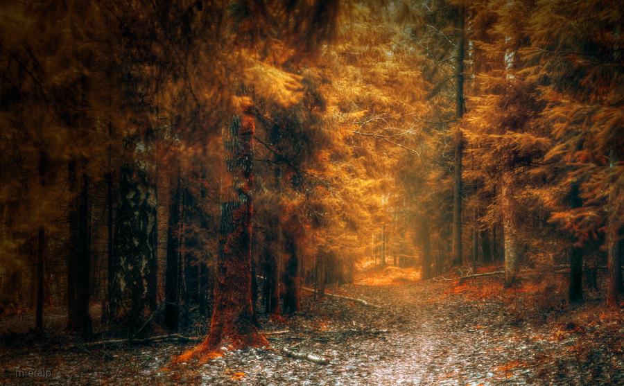 Forest of Gold by m-eralp