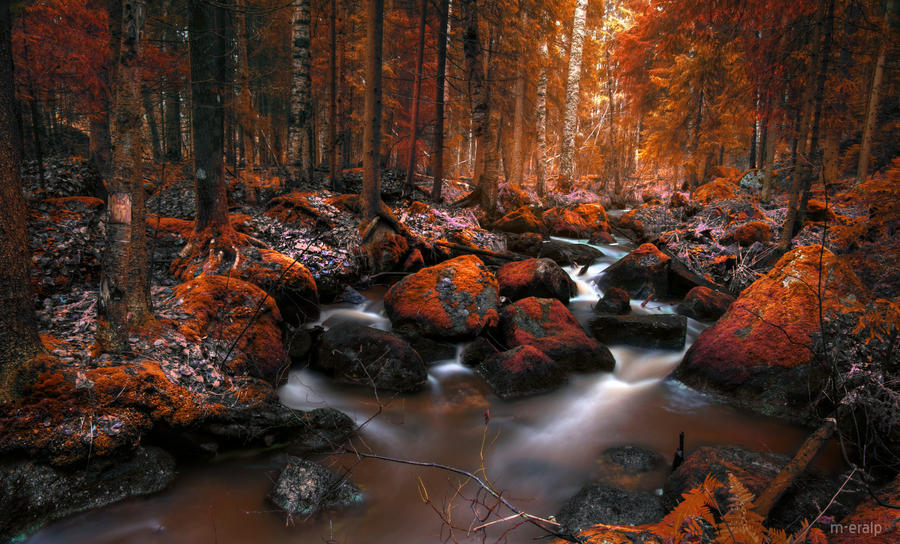 in late autumn by m-eralp