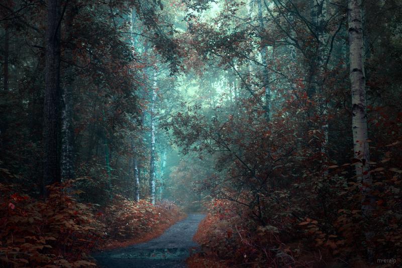 Dark woods by m-eralp