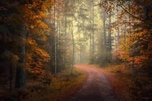 Autumn serenity by m-eralp