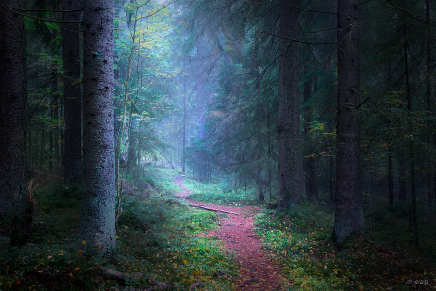 Dark woods II by m-eralp
