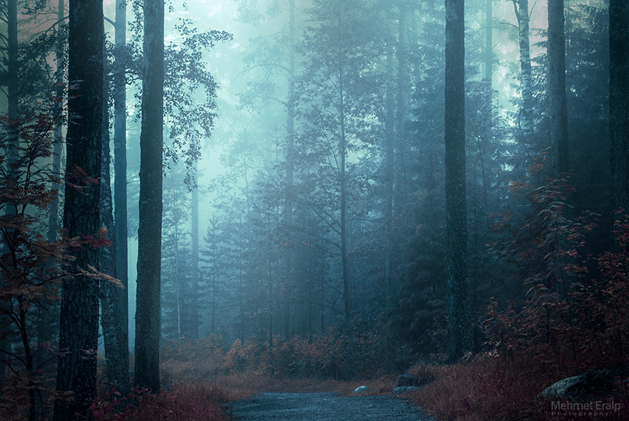 Fog in Forest by m-eralp