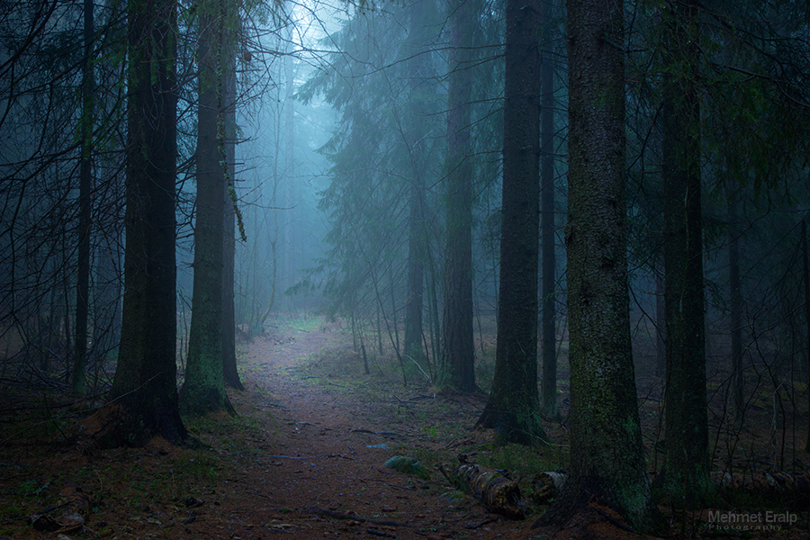 Foggy forest by m-eralp