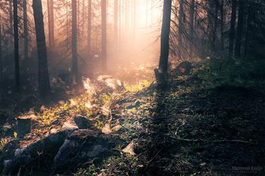 Spider forest II by m-eralp