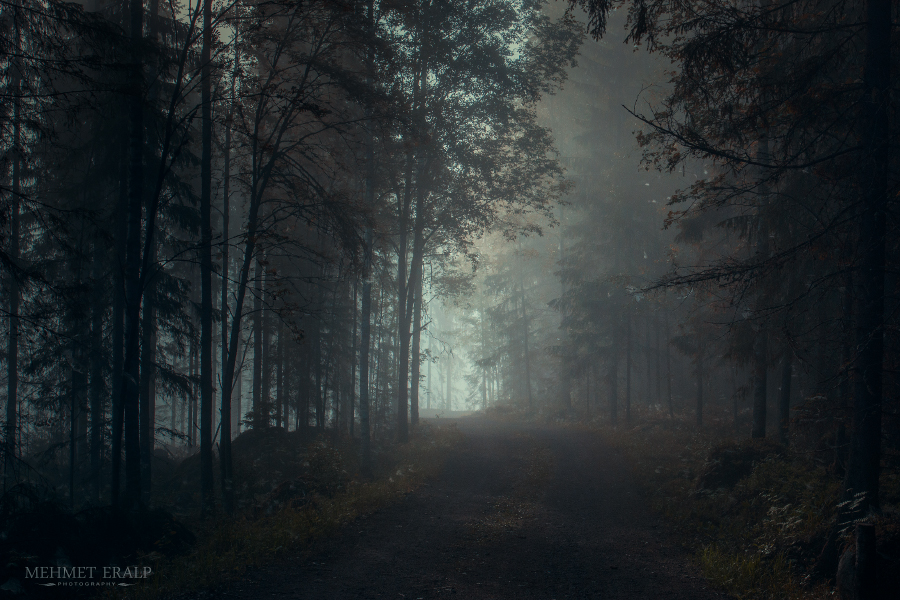 Dark Forest by m-eralp